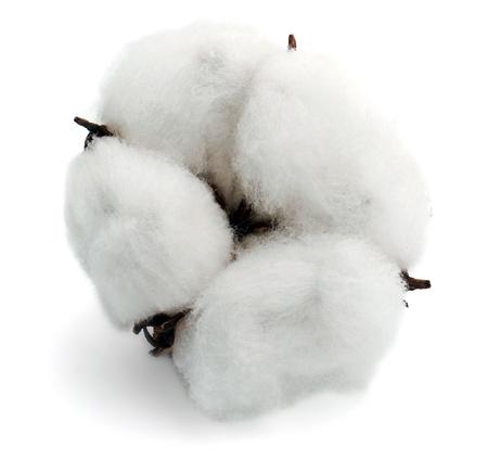 Cotton isolated on white background photo