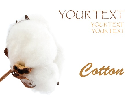 cotton ball: Elegant soft cotton isolated on white background