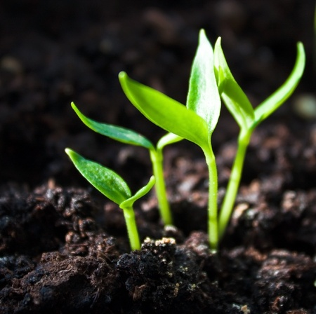 healthy growth: Group of the beginnings in soil