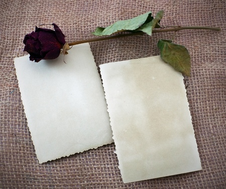 Two photos and dry rose photo