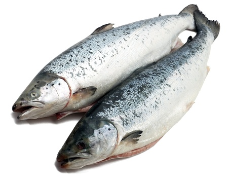 fine fish: Salmon fishs on the white