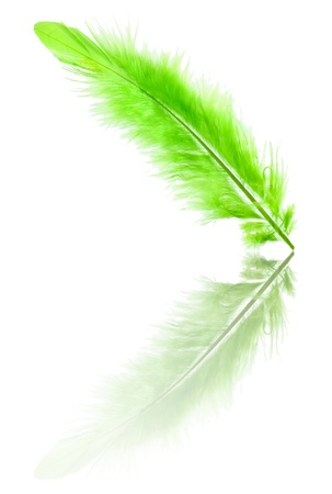 plumes: Green soft feather with reflection Stock Photo