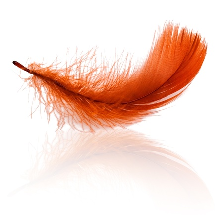 falling down: Red feather with reflection