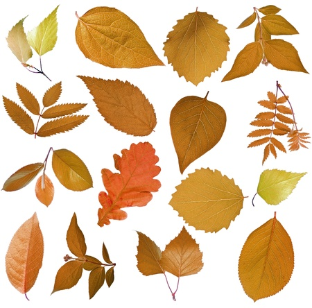 forest conservation: Set of autumn tree leaves Stock Photo