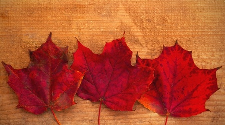 Beautiful red maple leaves on wooden background photo