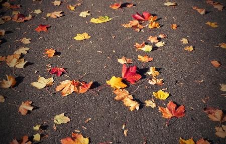 Autumn color leaves on asphalt photo