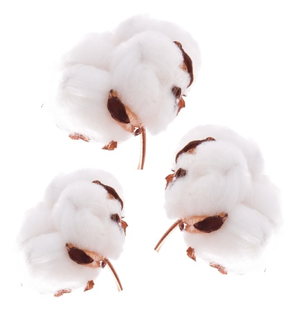 Beautiful cotton ball over white background Stock Photo