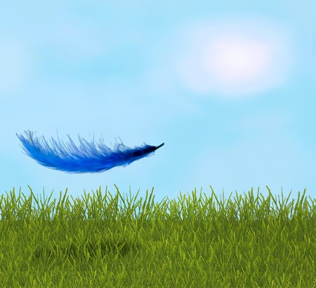 Feather in the sunny field photo
