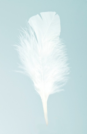 White feather on the blue bakground Stock Photo - 11208111