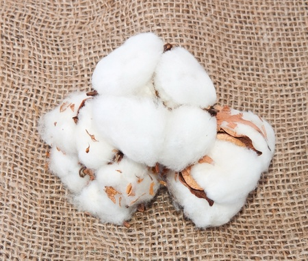weave ball: Cotton balls on the sack material Stock Photo