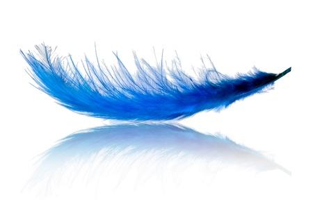 pluma: Pluma azul volando sobre blanco Foto de archivo