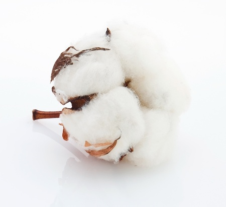 Cotton soft ball with reflection photo
