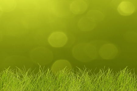 agriculture wallpaper: Grass on  sunny highlight day