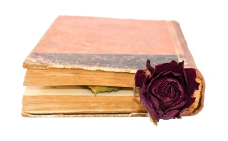 Rose in the closed book photo