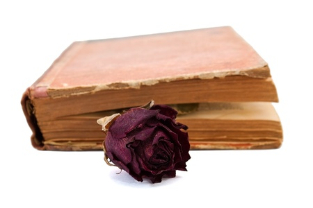 Dry rose in the book photo