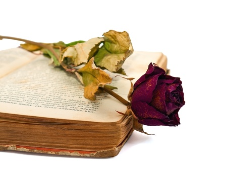 Old open book with dry rose photo