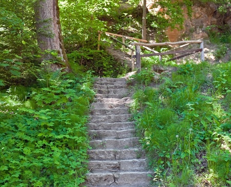 Old stairs in the forest photo