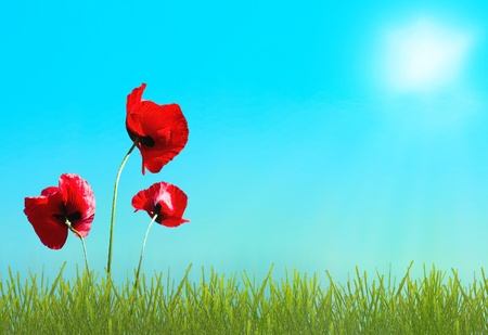 Sunny highlight on sky and green grass with red  poppy photo
