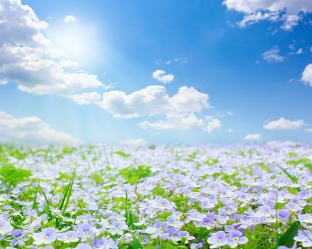Forget me not field on sunny beautiful day photo