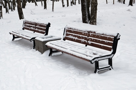 Two benches in winter park photo