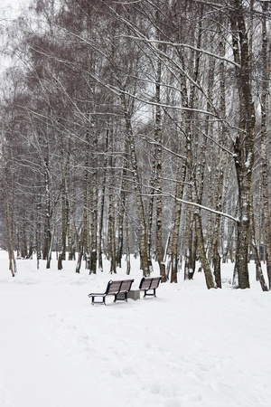 Snowy benches in winterpark  photo