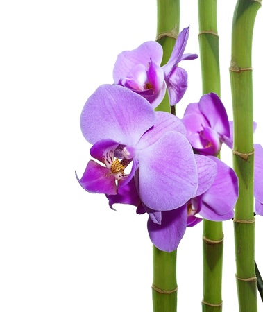 tropical border: Violet orchid and bamboo sticks Stock Photo