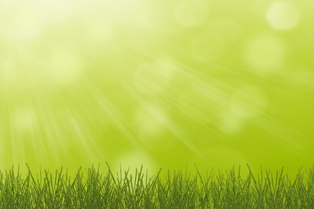 Green spring background with young grass photo