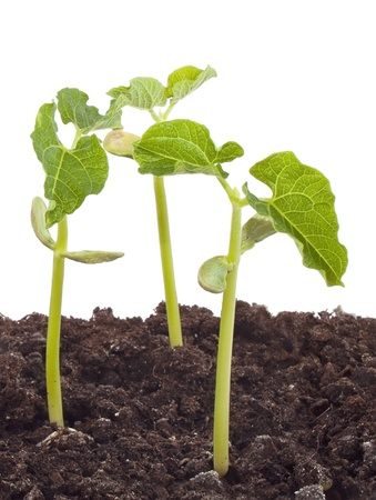 Groups of plants growing in soil Stock Photo - 12543403