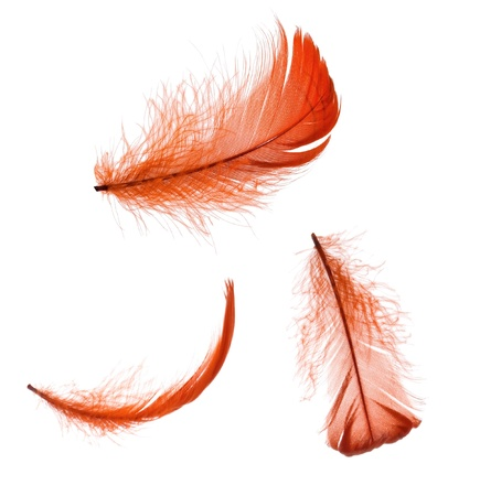 Set of elegant red feather in different positions Stock Photo