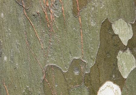 cortex: Pattern of the tropical tree cortex