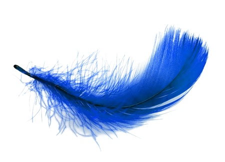 Blue soft feather on white background photo