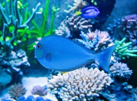 Salt water ocean underwater life Stock Photo - 13043642
