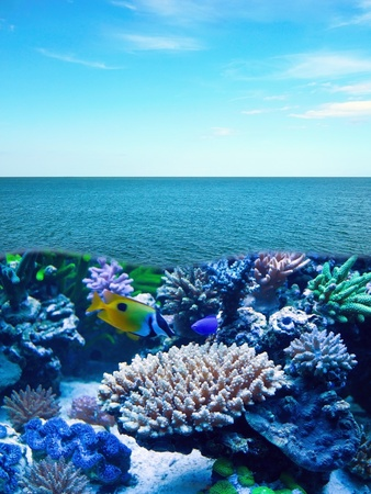 Exotic underwater life in sea with reef and tropical fish photo