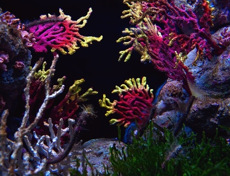 Tropical salt water aquarium Stock Photo - 13431180