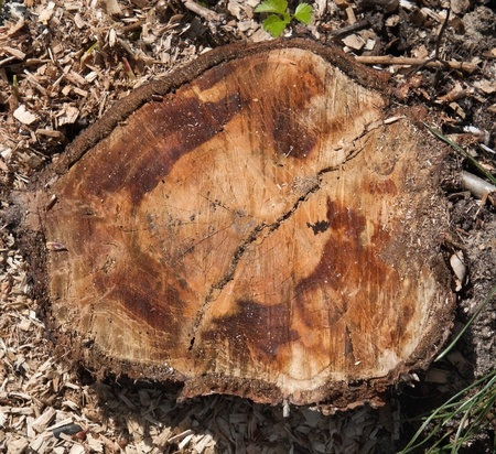 Stump in the wood photo