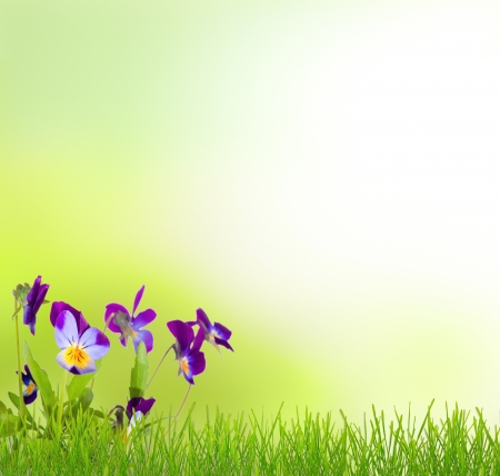 Grass and pansy flower natural background photo