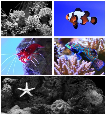 Tropical aquarium with coral reef and fish photo