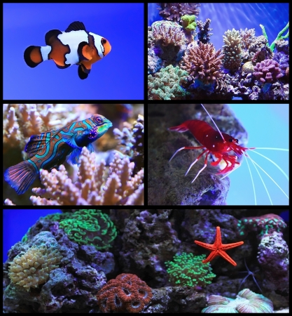 Tropical exotic fish and coral reef photo