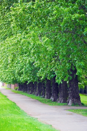 Row of trees in park Stock Photo - 14352146