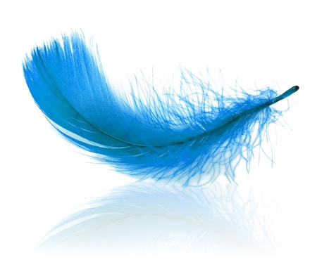 Elegant plume with reflection Stock Photo - 14481249