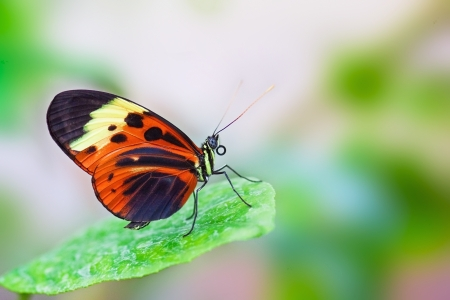 Butterfly sitting on the green leaf photo