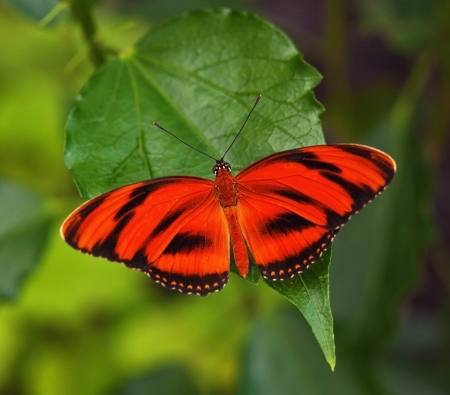 Red butterfly on the leaf photo