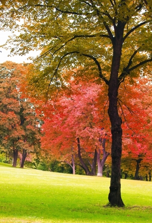 autumn color: Tree in autumn park