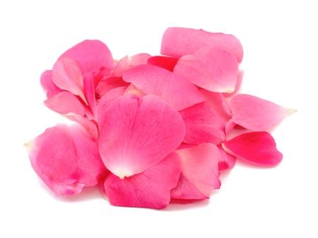 manjar: Grupo de pétalos de rosa sobre fondo blanco Foto de archivo