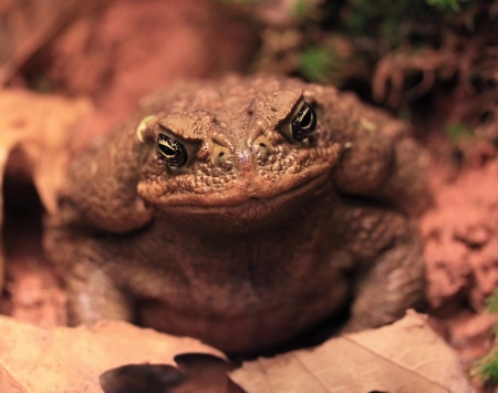 Toad in the plants photo