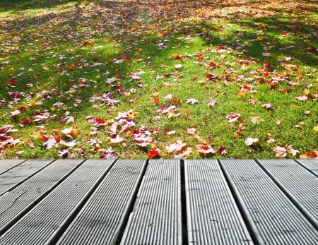 Autumn maple leaves near the wooden path photo