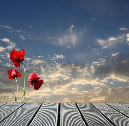 naturaleza: Wood pasarela sobre el cielo con las amapolas rojas Foto de archivo