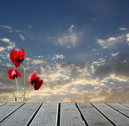 background nature: Wood walkway over sky with red poppies