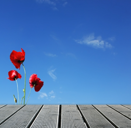 Wood walkway over sky with red poppies photo