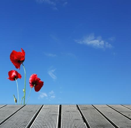 wooden dock: Wood walkway over sky with red poppies